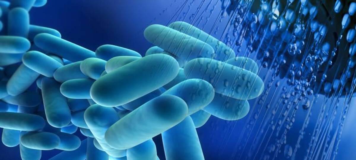 Legionella douchekop